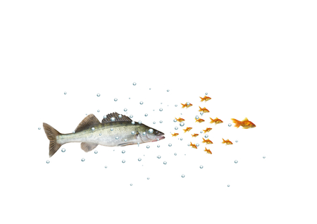 chasing the shoal of fish predator with bubbles on white background Stock Photo