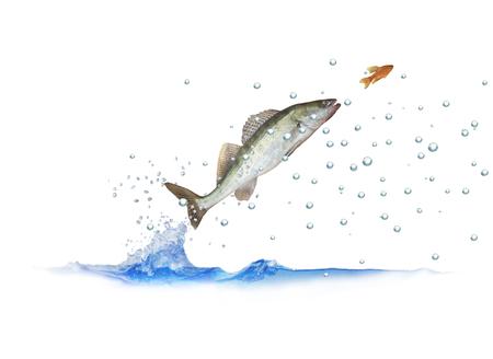 sauter pour le sandre de poisson avec des bulles sur fond blanc