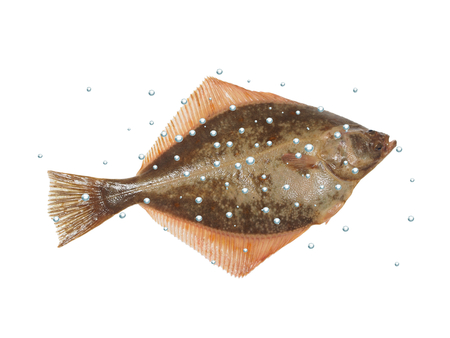 big fish flounder with bubbles on white background Banque d'images