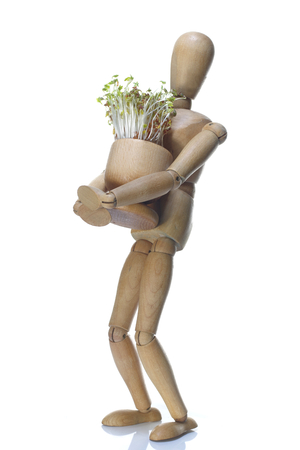 wooden dummy and pot with cuckooflower on white background