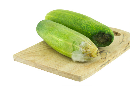 depraved: Rotten cucumber isolated on the white background