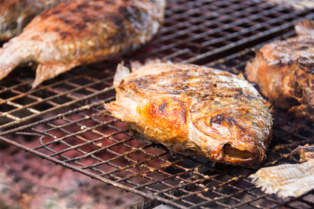 salmo: Grilling fish on campfire