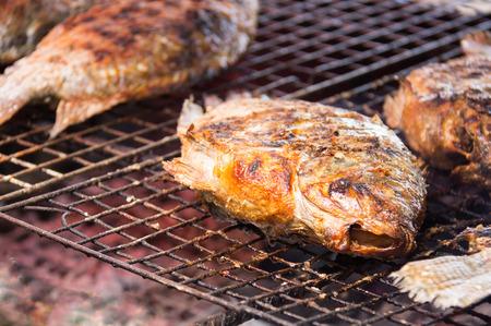 salmo trutta: Grilling fish on campfire