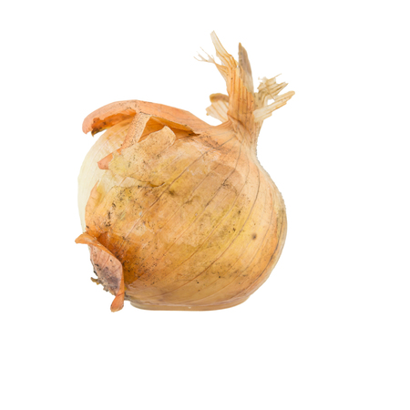 uneatable: rotten onion isolated on white background