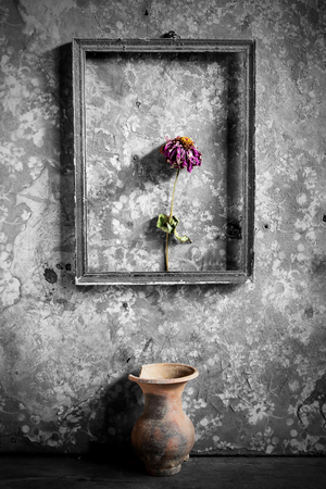 photos of pattern: flower in a picture frame black and white,and vase on wooden background,still life