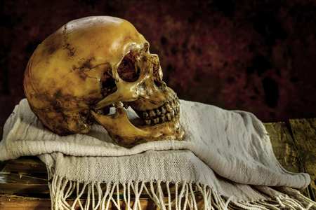 cadaver: Still Life with a Skull on white scarf