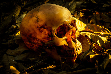 pile of leaves: Still life with human skull in a pile of leaves Stock Photo