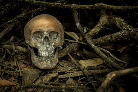 manuscript: Still Life with a Skull in forest Stock Photo