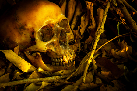 Still life with human skull in a pile of leaves Stock Photo