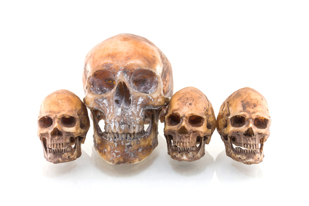 Human skull isolated on white background Stock Photo