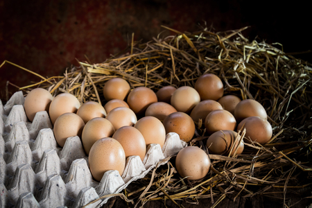 gamme de produit: still life eggs in the panel on straw