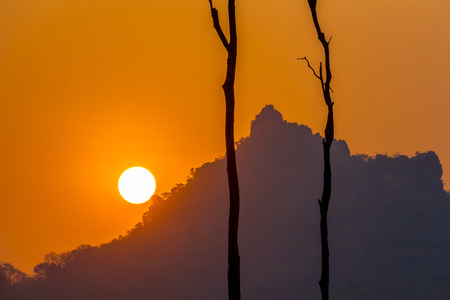 died: sunset with dead tree, silhouette shot