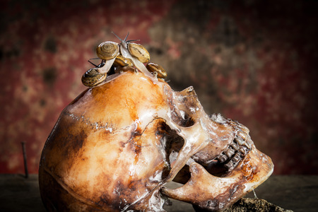withe: Still Life withe Human skull on wood and snails.