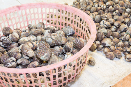cockles: Fresh blood cockles in sea food market Stock Photo