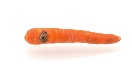 Rotten carrot isolated on white background