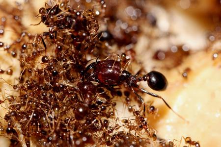 Ants on the ground. Macro