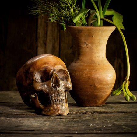cadaver: Still Life with Skull and vase,earthenware Stock Photo