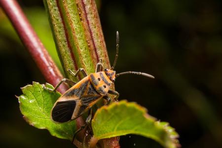 feeler: Bug macro ,on a green leaf as background
