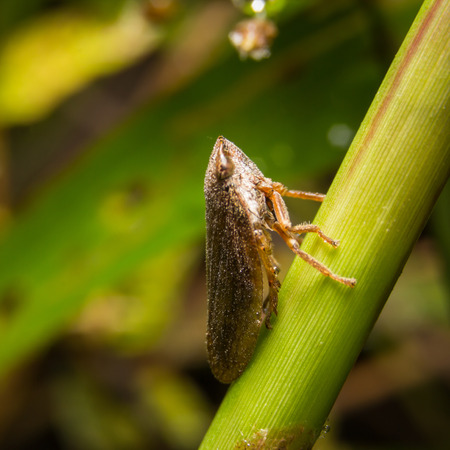 Bug macro ,on a green leaf as background