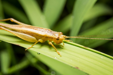 Cricket on nature leaves as background