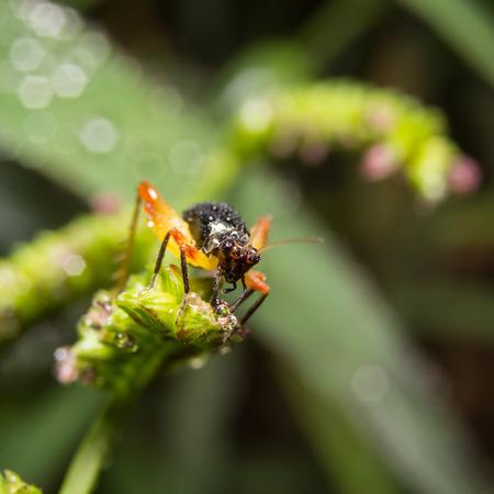 destructive: Cricket on nature leaves as background