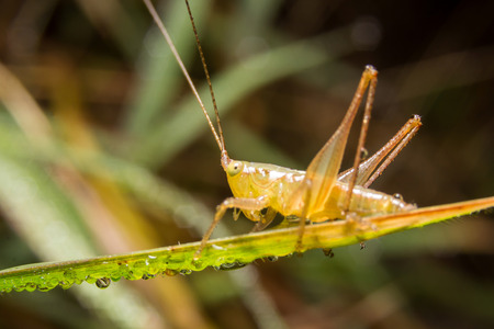 Grasshopper on nature leaves as background