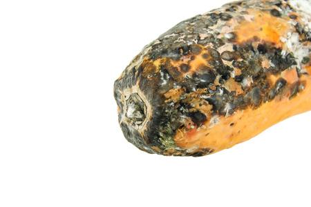 penicillium: rotten papaya isolate on white background