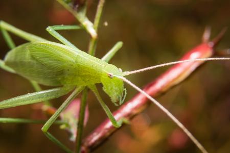 destructive: Bug macro, on nature leaves as background