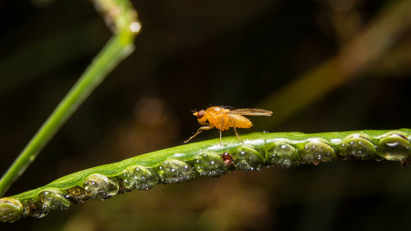grass close up: Fly on nature leaves as background