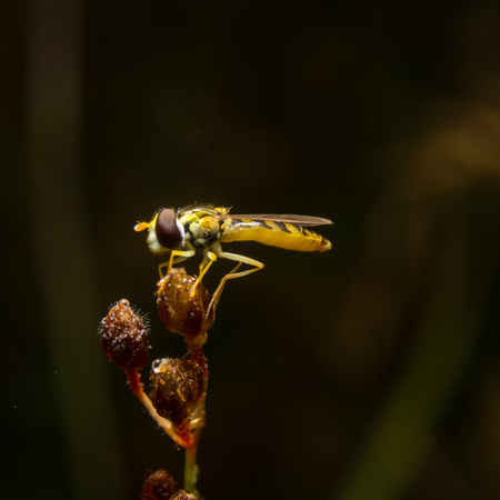 eye close up: Fly on nature leaves as background