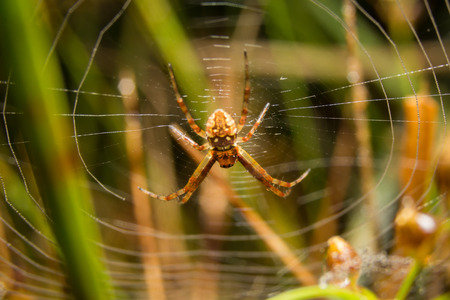 animal trap: Spider on nature leaves as background