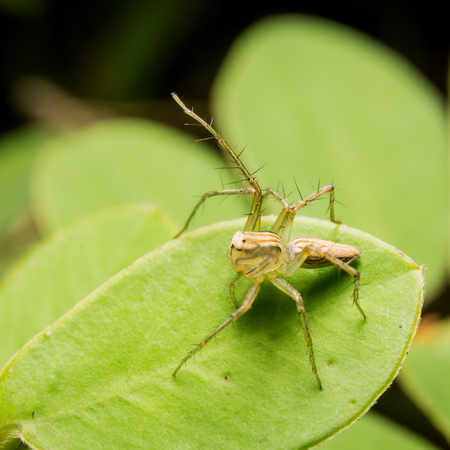 Spider on nature leaves as background