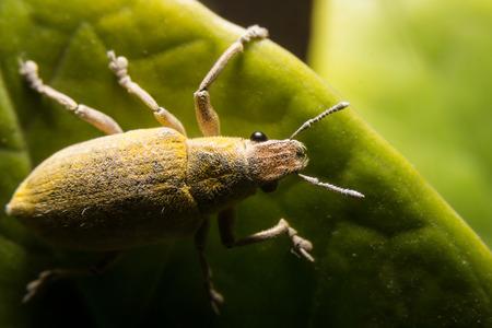 ploy: Moth dust, gold leaf background.Macro