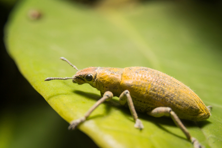 Moth dust, gold leaf background.Macro