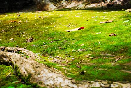 maleza: El suelo del bosque está lleno de helechos.