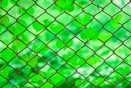 beautiful weed, beautiful unwanted flora on fencing
