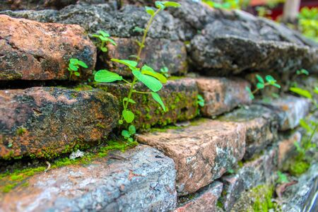 Closeup of brick wall with ivy on the sides Tree  with brick wall background Stockfoto