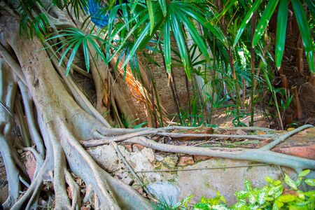 Digital painting tree roots , Texture and layer of roots in Thailand Stockfoto