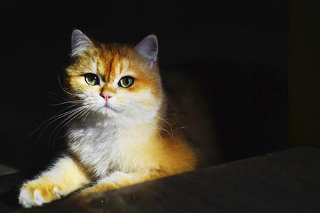 Cute Kittens isolated