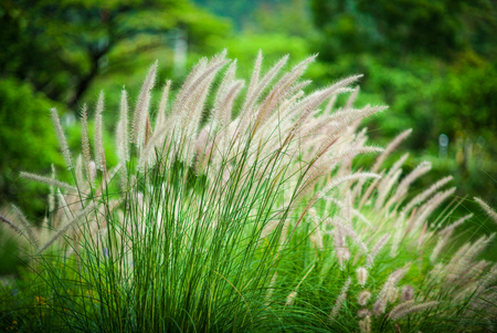White grass is a group of shifting winds. Stock Photo
