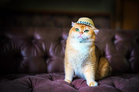 Cute orange cat sitting on a brown sofa Stock Photo