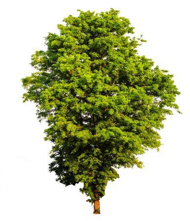 Tropical tree tree asia nature
