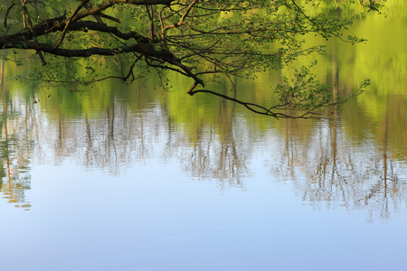 Branches over the lake. Spring landscape with reflection in the water as a background.
