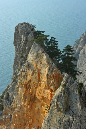 tallness: Cliff of Crimea. Cliff above the sea with the crimean pines.