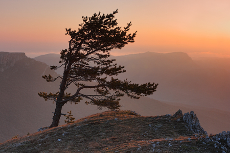 Sunset in mountain. Pine on the edge of the cliff in the mountains of Crimea in the evening.