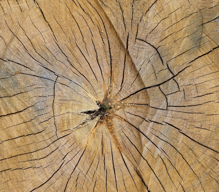 Stump surface texture. Top view of cut of tree covered cracks. Stock Photo