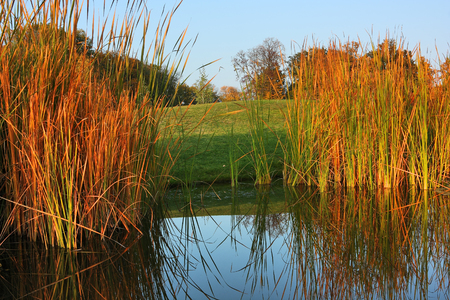 mirror: Autumn landscape with sedge. Lake, meadow and forest.