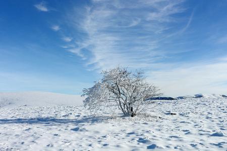 Winter tree. Frozen tree among the mountain plateau at bright sunny day. Crimea. Stock Photo