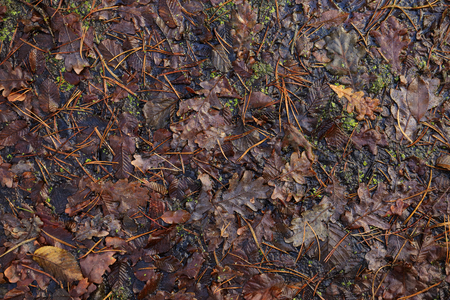 Texture of weeping fallen leaves. Autumn oak leaves and moss in the water.