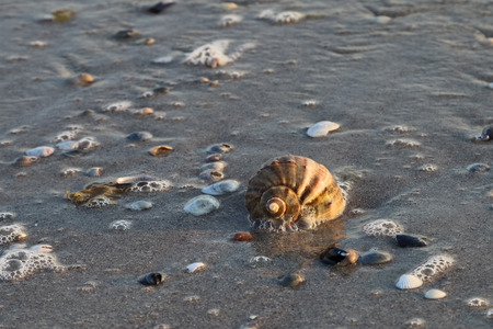 lia: Sea shell in the waves. Spiral structure of the shell lying on the seashore in the morning sun. Stock Photo